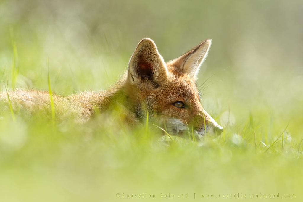 The Catcher in the Grass by thrumyeye