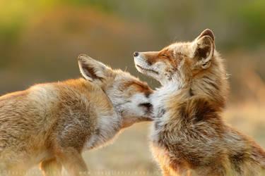 Foxy Love by thrumyeye
