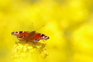 Endless Yellowness by thrumyeye