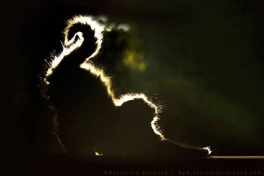 Mouni and The Light