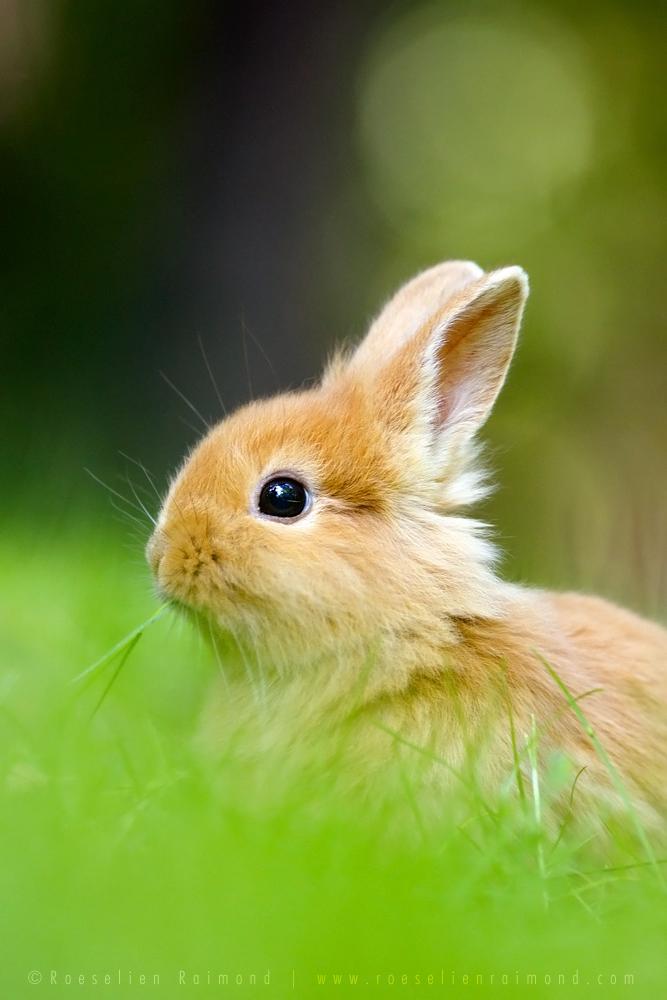 Baby Rabbit by thrumyeye