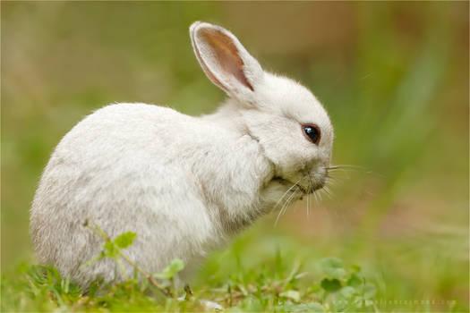 The Praying Rabbit