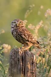 Owl Bouquet by thrumyeye