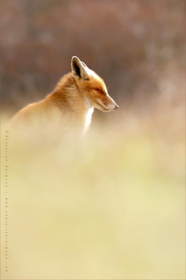 Zen Fox 2.0 by thrumyeye