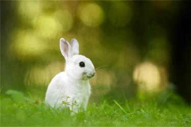 The Smiling White Rabbit by thrumyeye