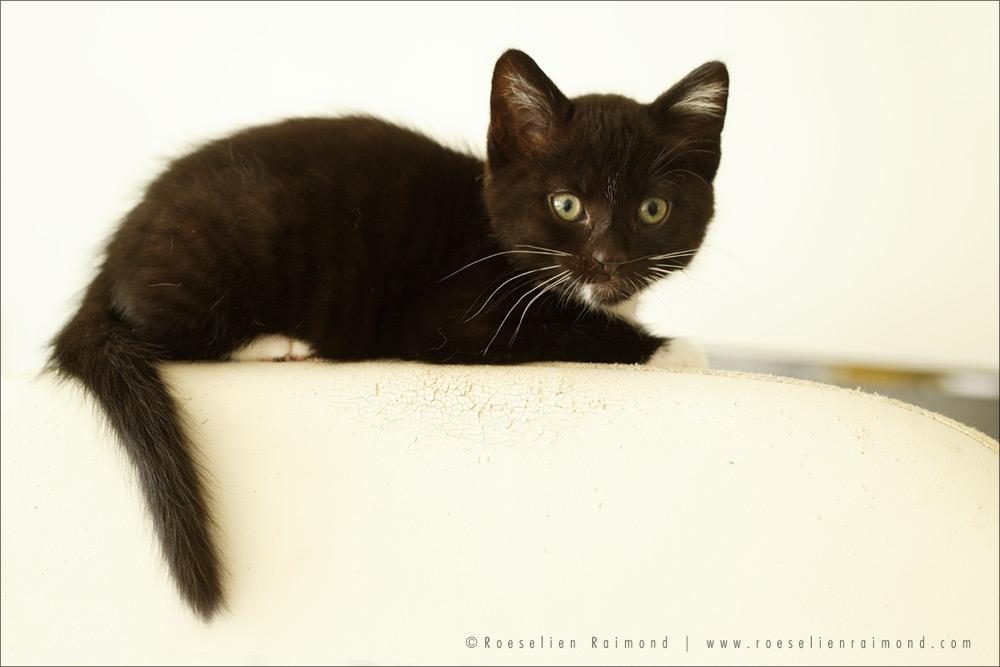 Bobbi, the Cute Kitten by thrumyeye