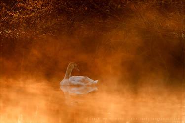 Swan in the Mist by thrumyeye