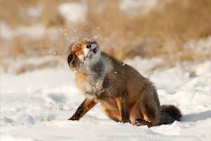 Slush Puppy by thrumyeye