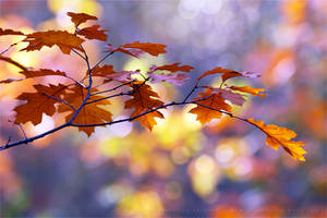 United Colours of Autumn by thrumyeye
