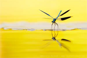 Narcissus by thrumyeye