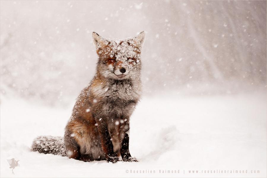 Fairytale Fox by thrumyeye