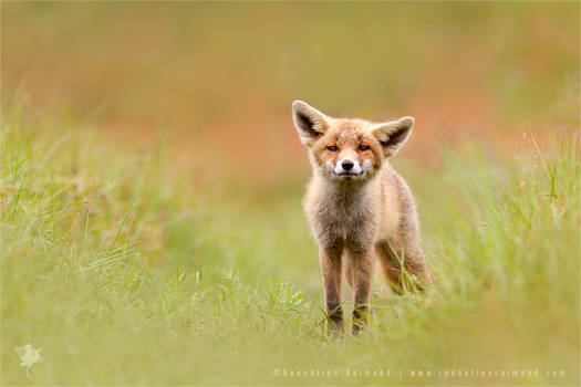 Funny Fox Kit and Wishing You All a Happy 2015