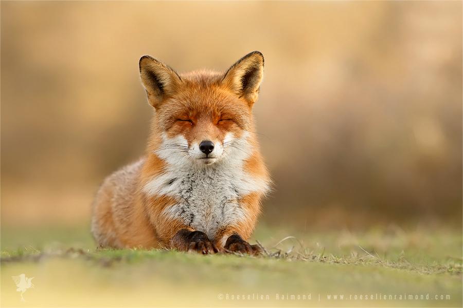 Zen Fox 3.0 by thrumyeye