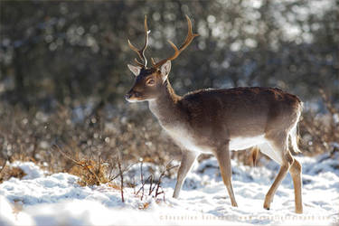 The Deer and the Snow by thrumyeye