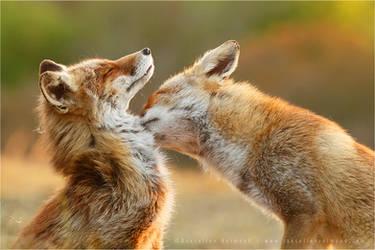 Love Bite by thrumyeye