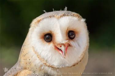 Happy Owl is Happy
