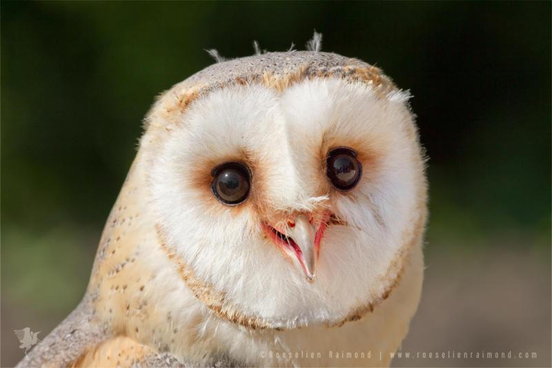 Happy Owl is Happy by thrumyeye