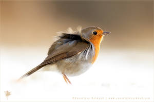 Little Red Robin in the Snow by thrumyeye