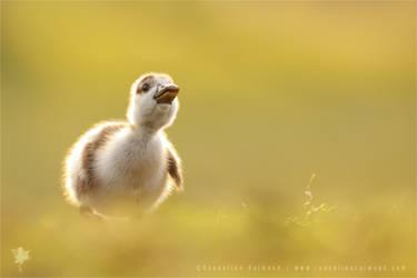 Dream Duckling by thrumyeye