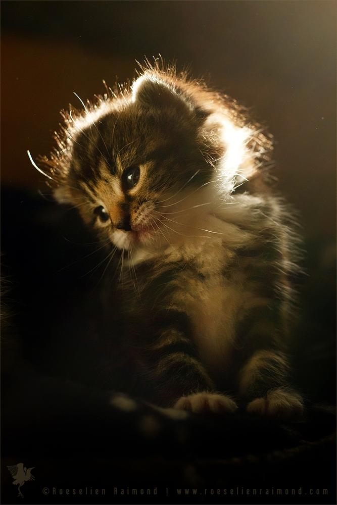 Little Kitten, Big Future by thrumyeye