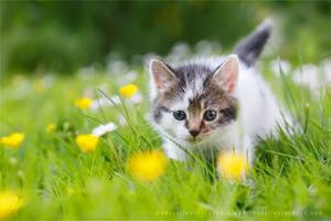 Brave New Kitten by thrumyeye