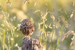 Litte Owl, Big World