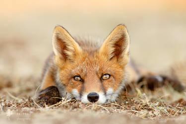 What Does The Fox Think? by thrumyeye