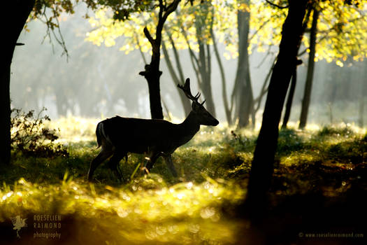 Fallow Deer in a Fairy Forest