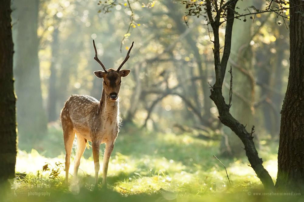 Zen Deer by thrumyeye