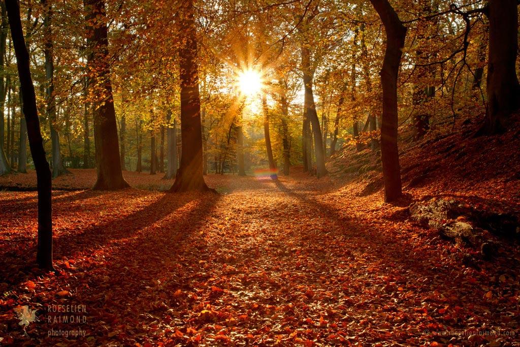 Autumn Magic by thrumyeye