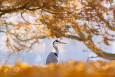 The Blue Heron and The Red Tree