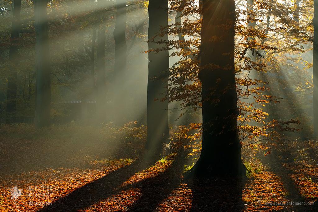 Rays of Light by thrumyeye