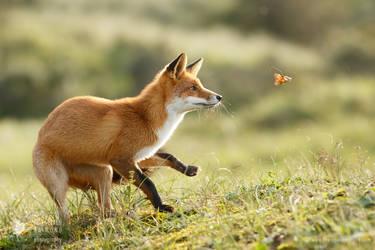 Red Fox in Autumn Mood by thrumyeye