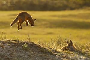 Take a leap......into 2016!
