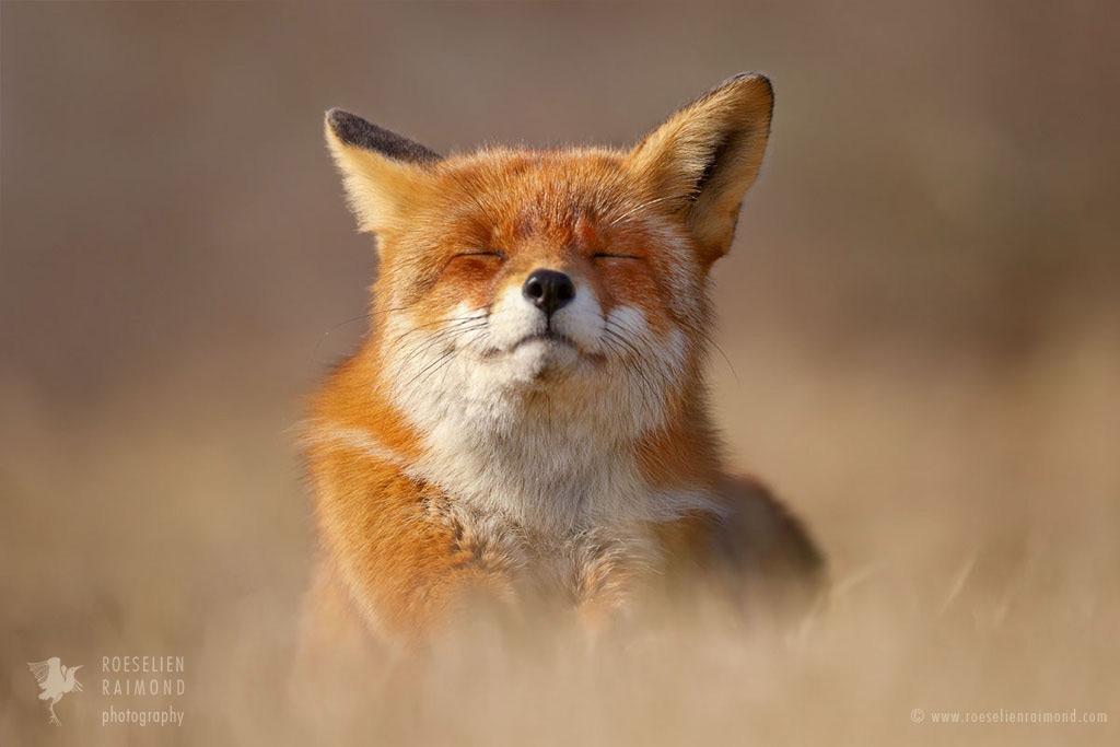 tumbunda: The Smiling Fox