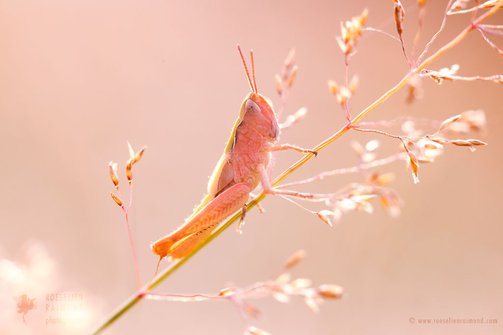 Mr. Pink by thrumyeye