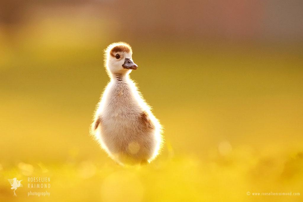 Lonely Birdie by thrumyeye