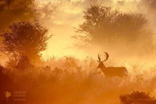 Magical Misty Morning
