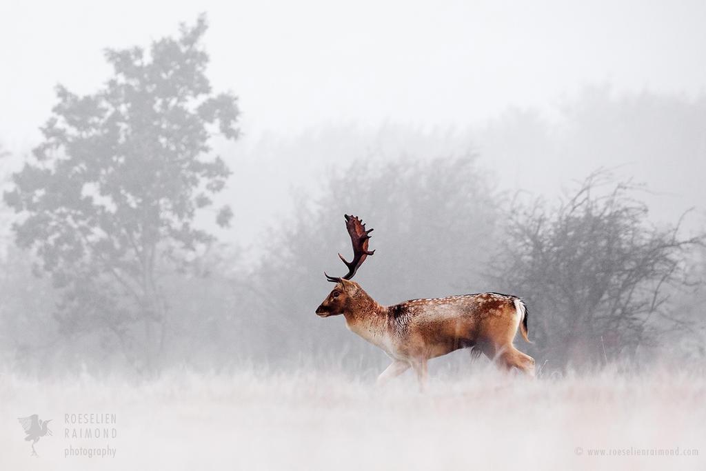 Dreamscape Deer by thrumyeye