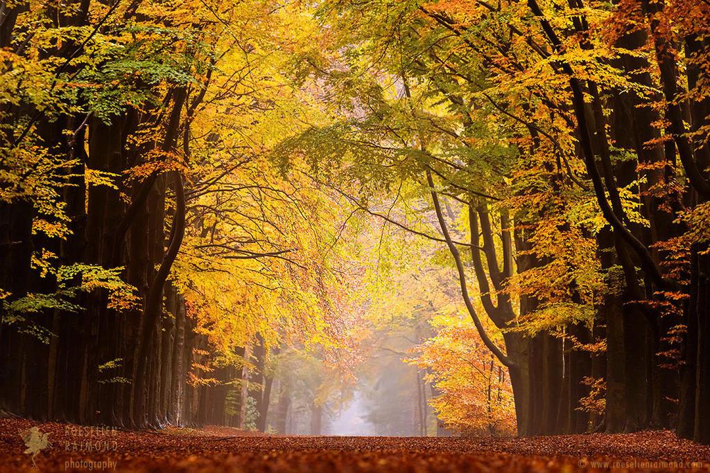 Autumn Lane by thrumyeye