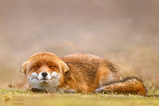 Smiling Fox is Smiling