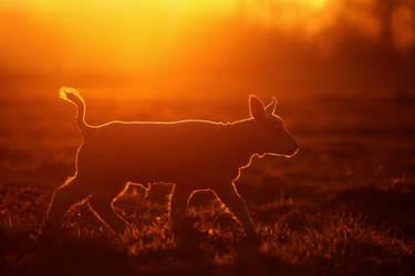 Enlightened Lamb by thrumyeye