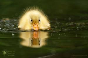 Bath Duckie by thrumyeye