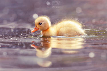 Cute Power - Yellow Duckling