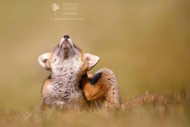 Funny Fox by thrumyeye