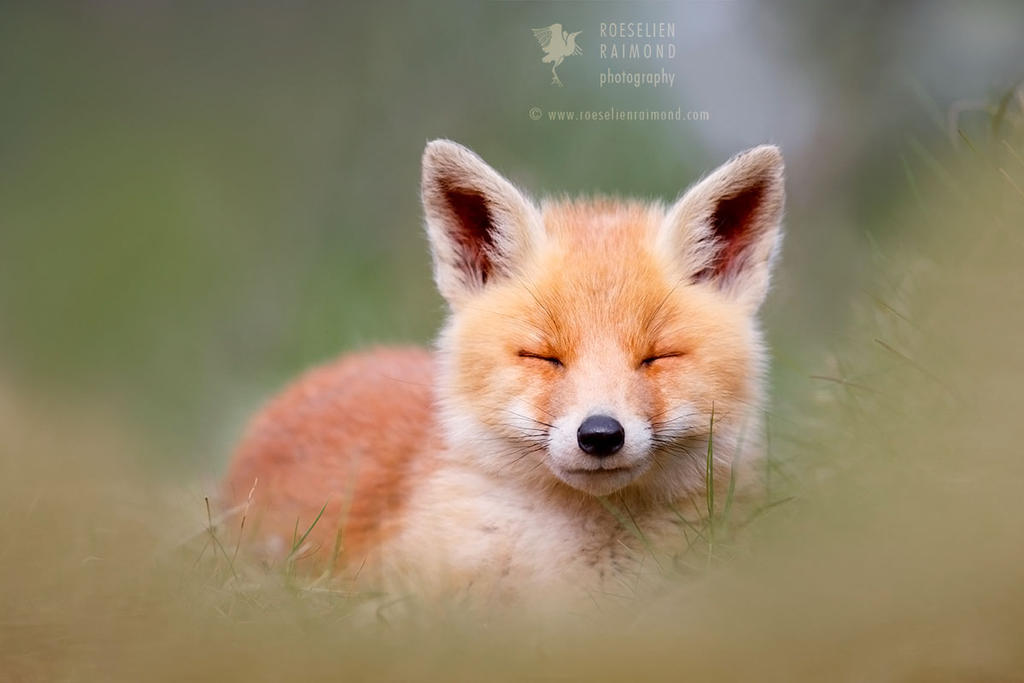 Zen Fox Kit by thrumyeye