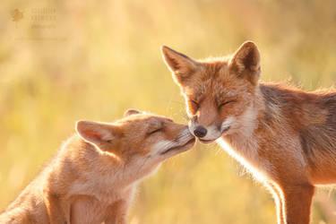 Animal Love by thrumyeye
