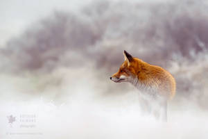 Red Fox in Snow World by thrumyeye