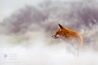 Red Fox in Snow World by thrumyeye