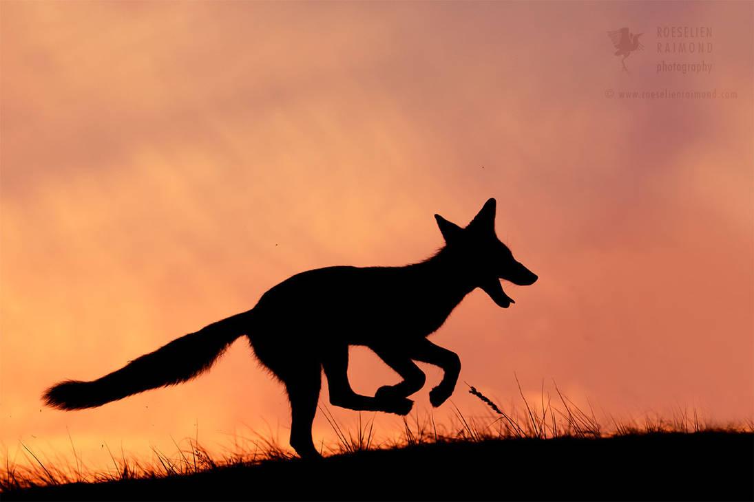 Silhouette series - Happy Fox by thrumyeye